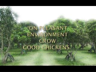 'On pleasant  environment grow  good chickens.'