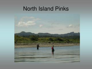 North Island Pinks