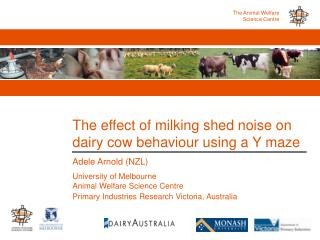 The effect of milking shed noise on dairy cow behaviour using a Y maze