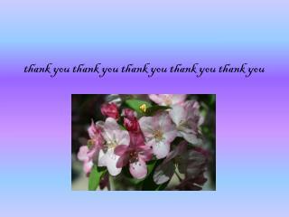 t hank you thank you thank you thank you thank you