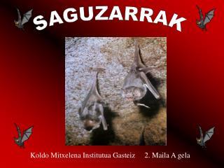 SAGUZARRAK