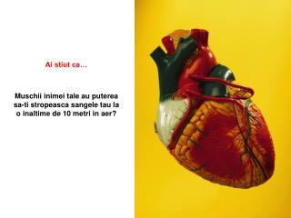Muschii inimei tale au puterea sa-ti stropeasca sangele tau la o inaltime de 10 metri in aer?