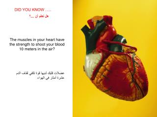 The muscles in your heart have the strength to shoot your blood 10 meters in the air?