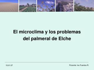 El microclima y los problemas  del palmeral de Elche