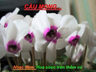CẦU MONG...