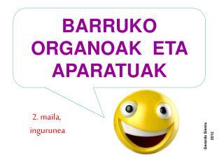 BARRUKO ORGANOAK  ETA APARATUAK