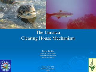 The Jamaica  Clearing House Mechanism Dayne Buddo Senior Research Officer Natural History Division
