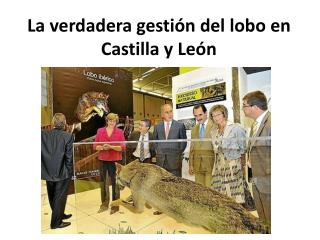 La verdadera gestión del lobo en Castilla y León