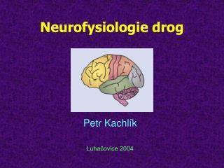 Neurofysiologie drog