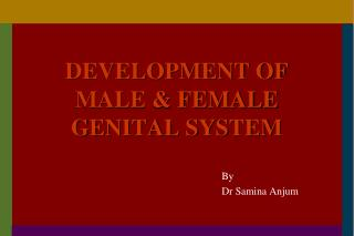 DEVELOPMENT OF MALE & FEMALE GENITAL SYSTEM