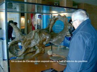 Un crâne de Cératopsien exposé dans le hall d'entrée du pavillon
