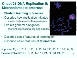 Chapt 21 DNA Replication II: Mechanisms; telomerase