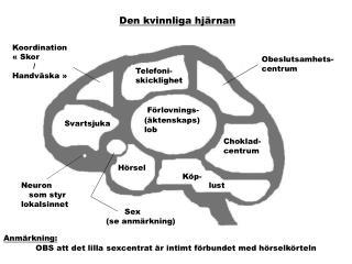Den kvinnliga hjärnan