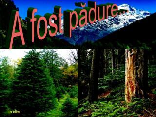 A fost pădure...