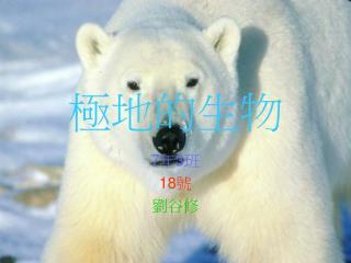 極地的生物
