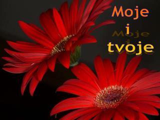 Moje i  tvoje