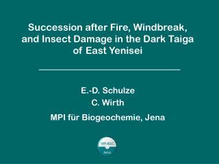 Successional dynamics of the dark taiga
