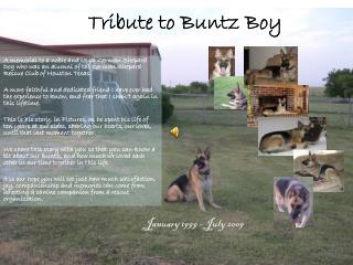 Tribute to Buntz Boy