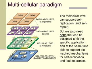 Multi-cellular paradigm