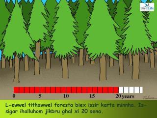 L-ewwel tithawwel foresta biex issir karta minnha. Is-sigar ihalluhom jikbru ghal xi 20 sena.
