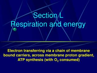 Section L   Respiration and energy