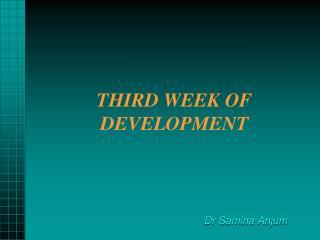 THIRD WEEK OF DEVELOPMENT