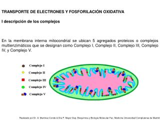 TRANSPORTE DE ELECTRONES Y FOSFORILACIÓN OXIDATIVA I descripción de los complejos
