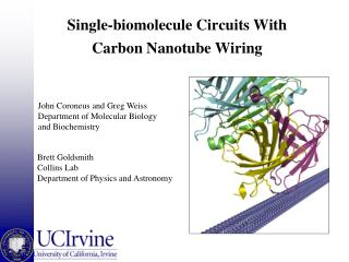 Single-biomolecule Circuits With Carbon Nanotube Wiring