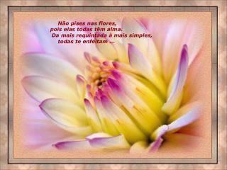 Não pises nas flores,  pois elas todas têm alma.