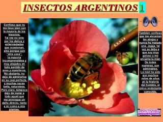 INSECTOS ARGENTINOS