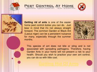 Getting Rid of Ants in the Home
