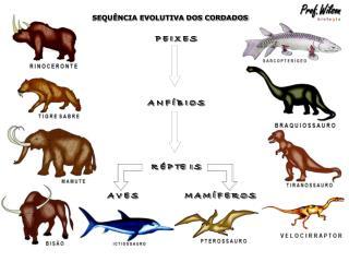 SEQU�NCIA EVOLUTIVA DOS CORDADOS