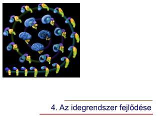 4. Az idegrendszer fejlődése