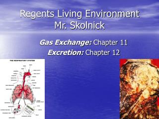 Regents Living Environment Mr. Skolnick