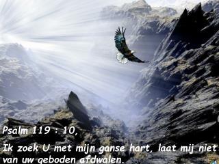 Psalm 119 : 10,  Ik zoek U met mijn ganse hart, laat mij niet van uw geboden afdwalen.