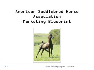 American Saddlebred Horse Association Marketing Blueprint