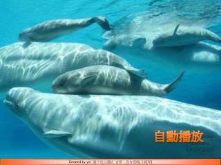 Created by yst   圖片取自網路  音樂:漁舟唱晚 ( 小提琴 )