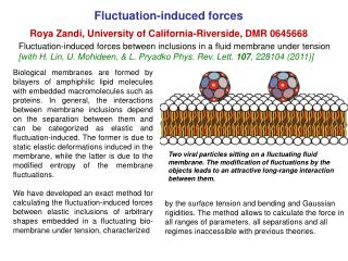 Fluctuation-induced forces Roya Zandi, University of California-Riverside, DMR 0645668
