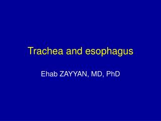 Trachea and esophagus