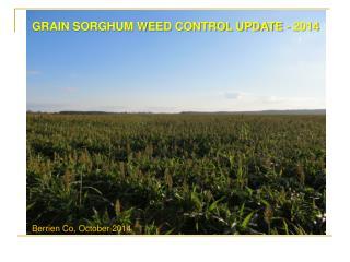 GRAIN SORGHUM WEED CONTROL UPDATE  - 2014
