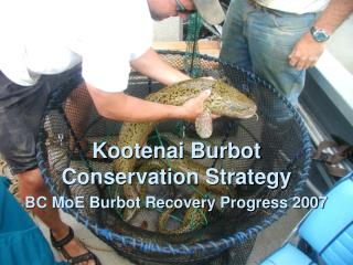 BC MoE Burbot Recovery Progress 2007