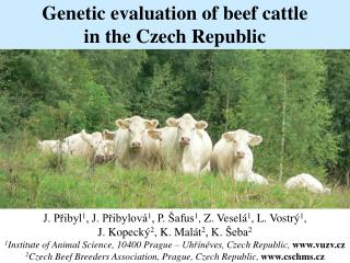 Genetic evaluation of beef cattle  in the Czech Republic
