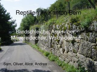 Reptilien im Kanton Bern