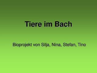 Tiere im Bach