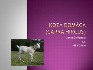 Janka Čerňanská 1.A GSF v Žiline