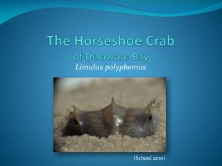 The Horseshoe Crab of Delaware Bay
