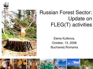 Russian Forest Sector:  Update on  FLEG(T) activities