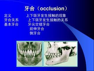 牙合 ( occlusion )