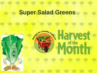Super  Salad Greens