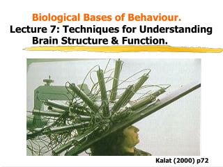 Biological Bases of Behaviour. Lecture 7: Techniques for Understanding    Brain Structure  Function.